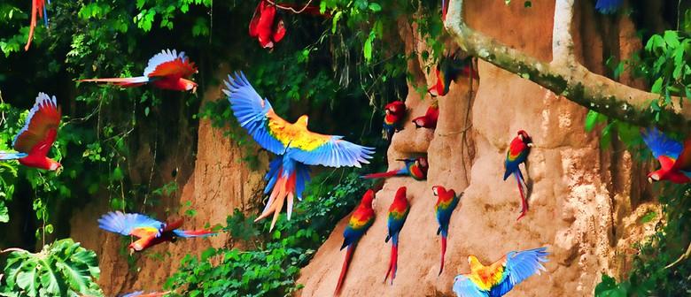 Amazonia Peru: Wild Adventure