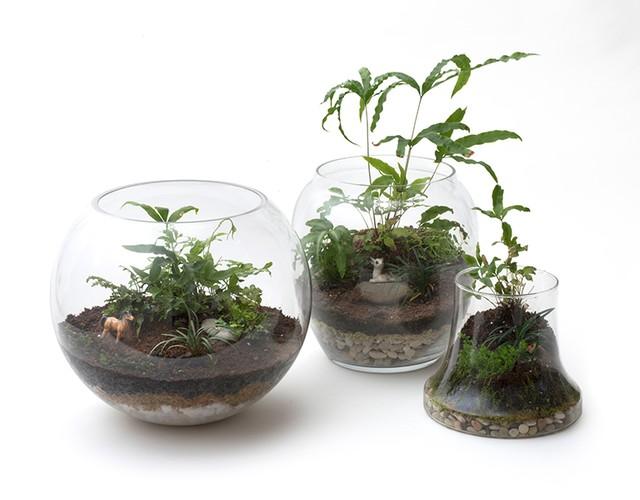 Petite green rainforest terrarium workshop at artifice - Petit terrarium ...