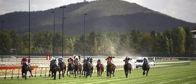 Bidvest Race Day