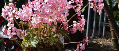 NSW Begonia Society Annual Exhibition