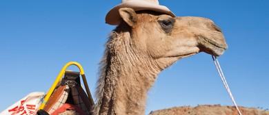 Lasseters Camel Cup