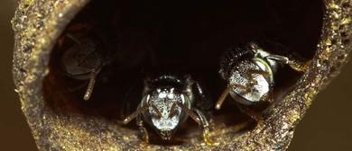 Native Bees and Backyard Beekeeping Workshop