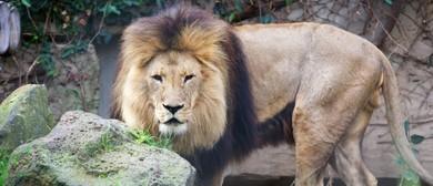 Dare to enter Lion Gorge