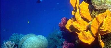 Twilight Talk – Great Barrier Reef