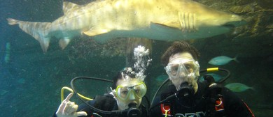 Take The Plunge With Shark Dive Xtreme