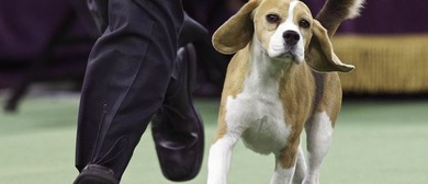Dubbo & District Kennel Club Championship Shows