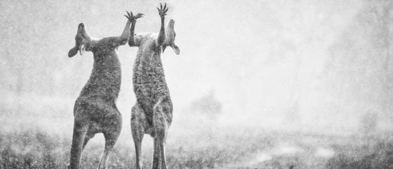 ANZANG Nature Photographer Of The Year