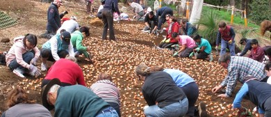 Volunteers Invited To Plant 2015 Tulip Display