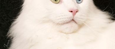 CCCA National Cat Show