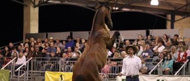 Double Dan Horsemanship Spectacular