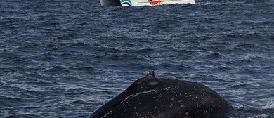 Whale Watching Tours & Cruises