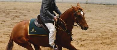 Australian Stock Horse Society National Show 2016