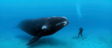 National Geographic - Brian Skerry