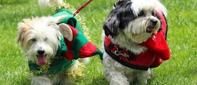 Big Day Out For Dogs & Canine Christmas Market