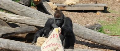 Werribee Open Range Zoo Christmas Concert