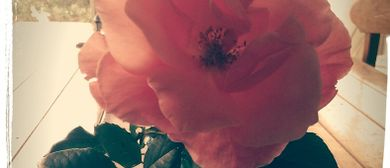 Flower Essence Workshop