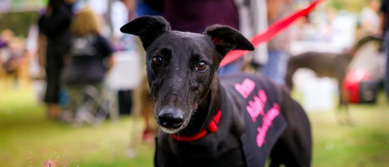 Greyhound Adoptions