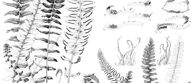 Botanic Art Workshop - A Journey Through Pen and Ink