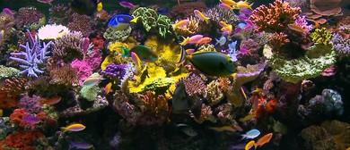 Yoga Class As You Watch Colourful Fish