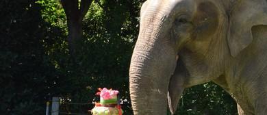 Tricia's Jumbo Birthday Party