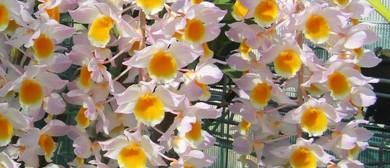 Aspley Orchid Society – Summer Spectacular